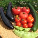 国際ボランティア菜園作業