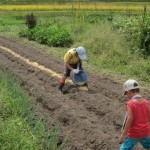 ボランティア菜園作業