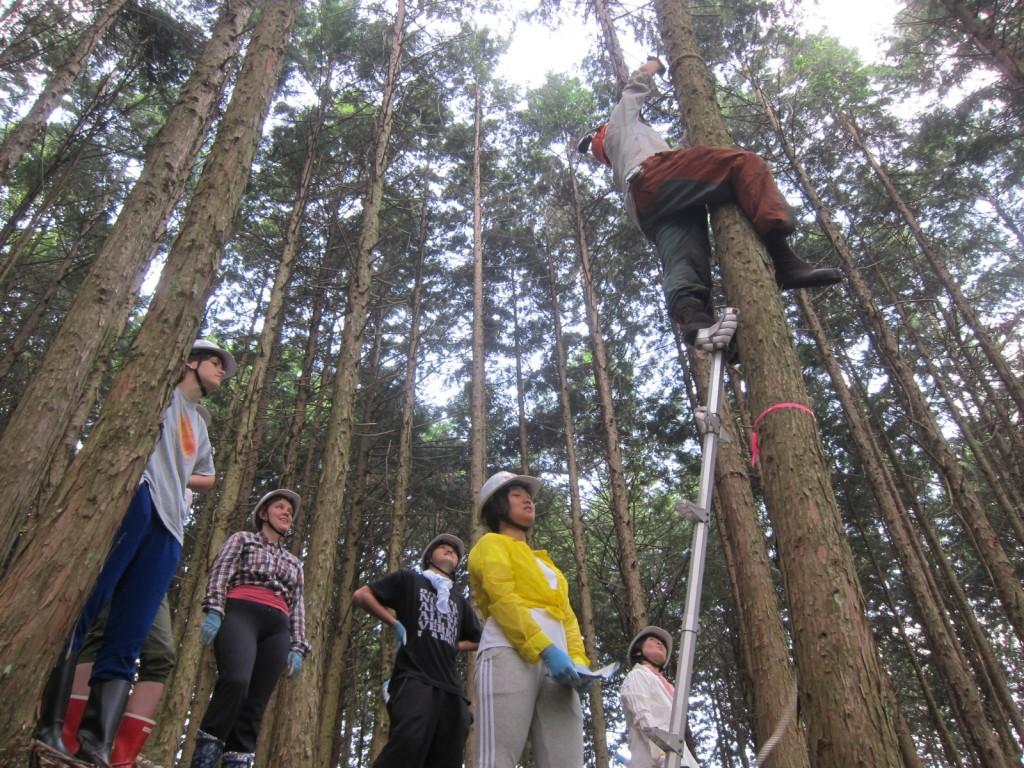 ena tree thinning