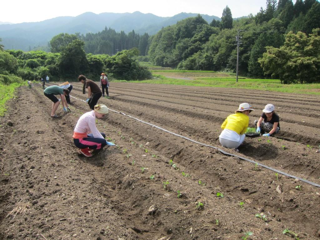 恵那ボランティア農作業1